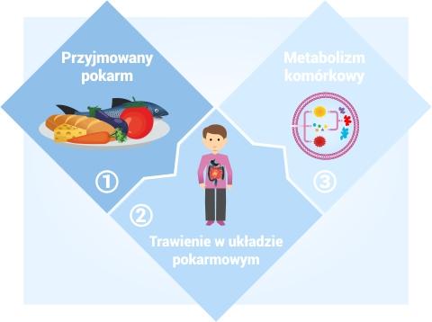metabolizm w 3 krokach